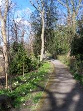 Path though Dickerson's Copse.