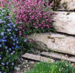 Rockery with spring flowers & carved stones