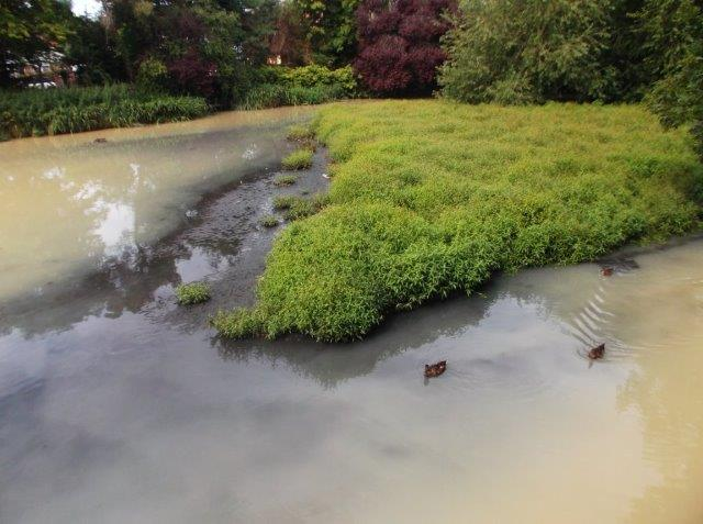 Polluted Mill Pond 29 July